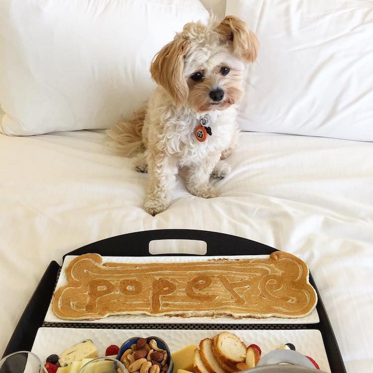 Stray Dog Turns Foodie At Pet Friendly Restaurants Love Your Pet Homeless Dogs Dog Restaurant