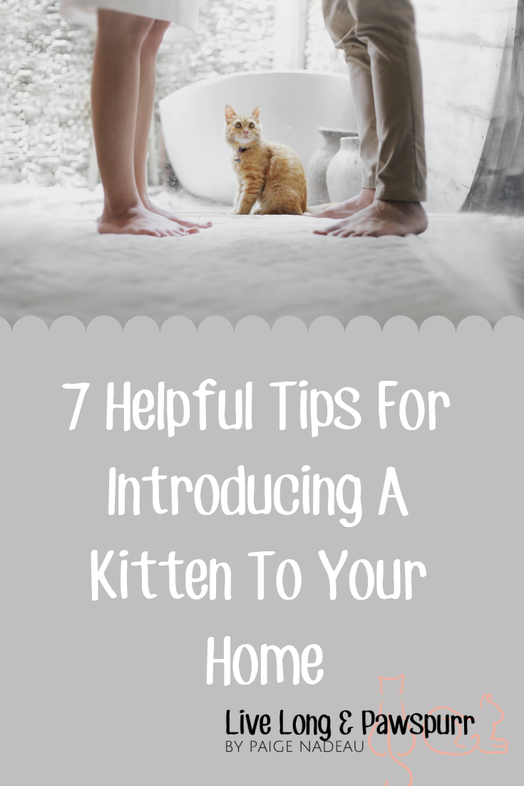7 Helpful Tips For Introducing A New Kitten To Your Home Live Long And Pawspurr Introducing Kitten To Dog How To Introduce Yourself Kitten