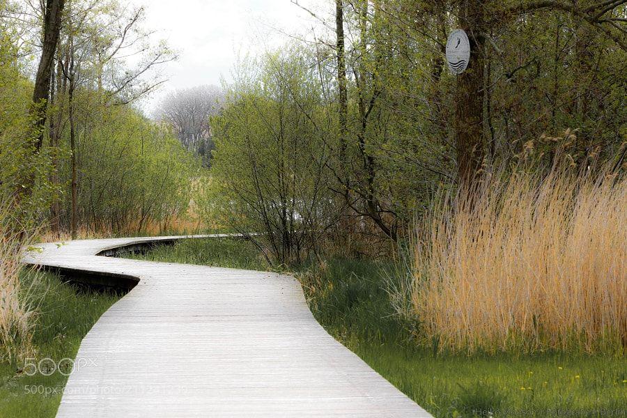 Ein möglicher Weg zum See (Moor) by HeikoMonson via http://ift.tt/2r1ipzp