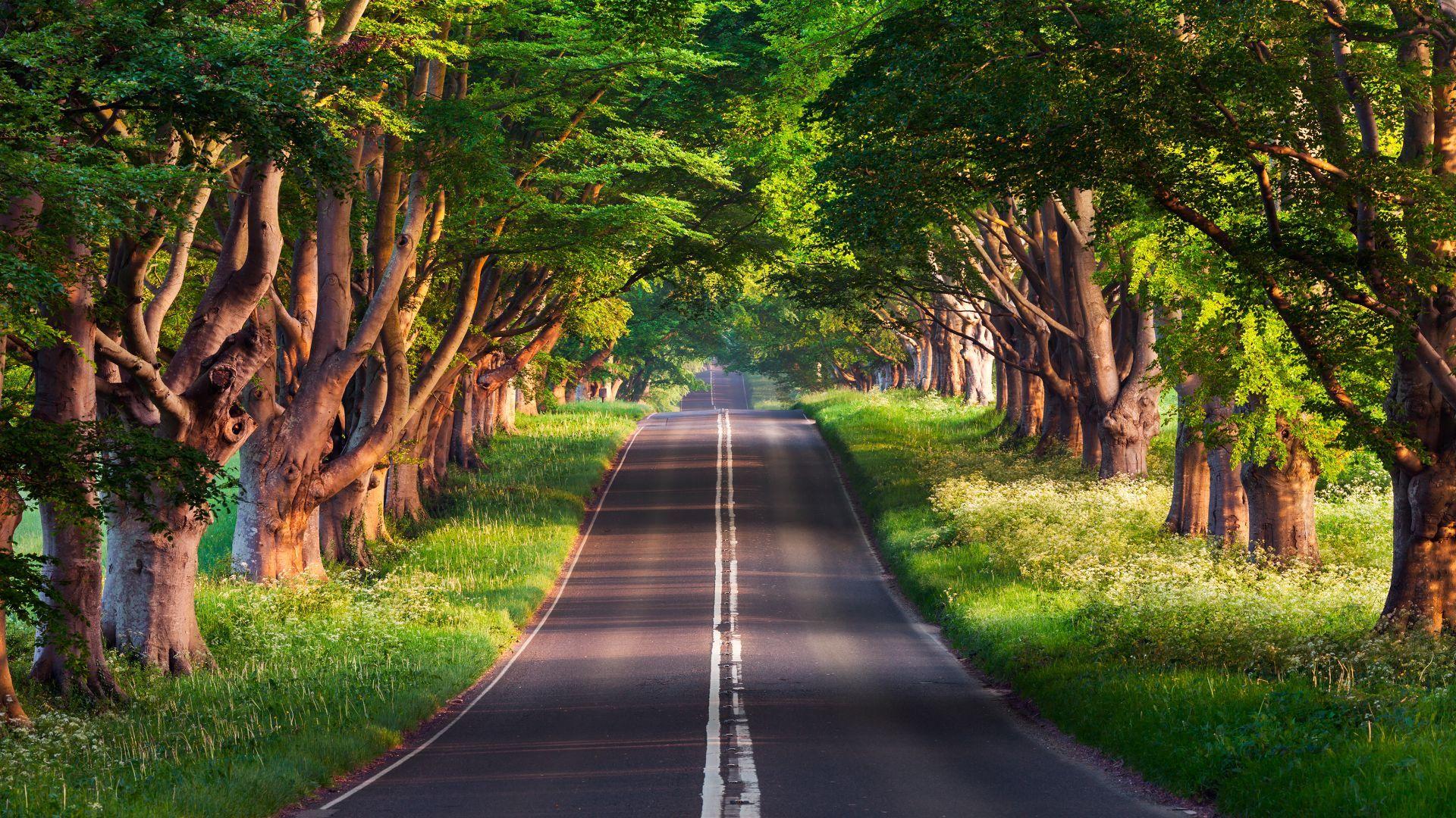 Road Trees Summer 4k Horizontal Paisaje De Fantasia Fondos