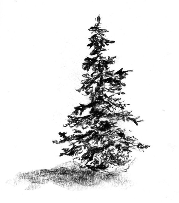 Image Credit The Above Is A Good Pencil Drawing Of An Evergreen When I Was A Kid I Worked Hard Tree Drawing Pencil Drawings Of Nature Tree Drawings Pencil