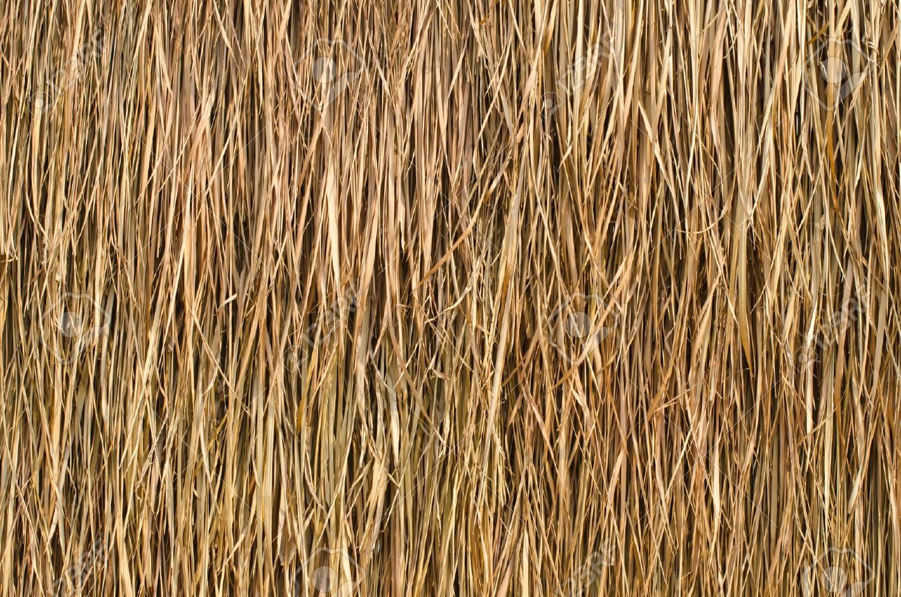 Thatch House Japan T 236 M Với Google Thatched Roof