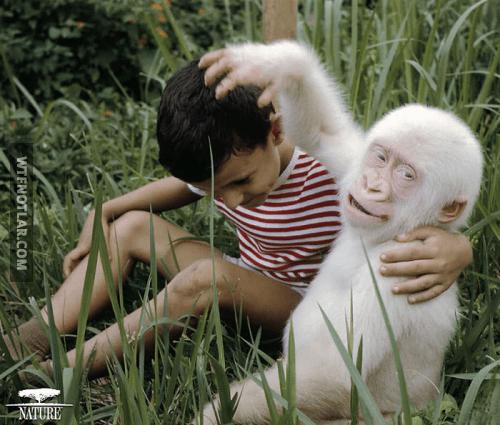 Harika görünen Albino hastası hayvanlar • WTF Notlar