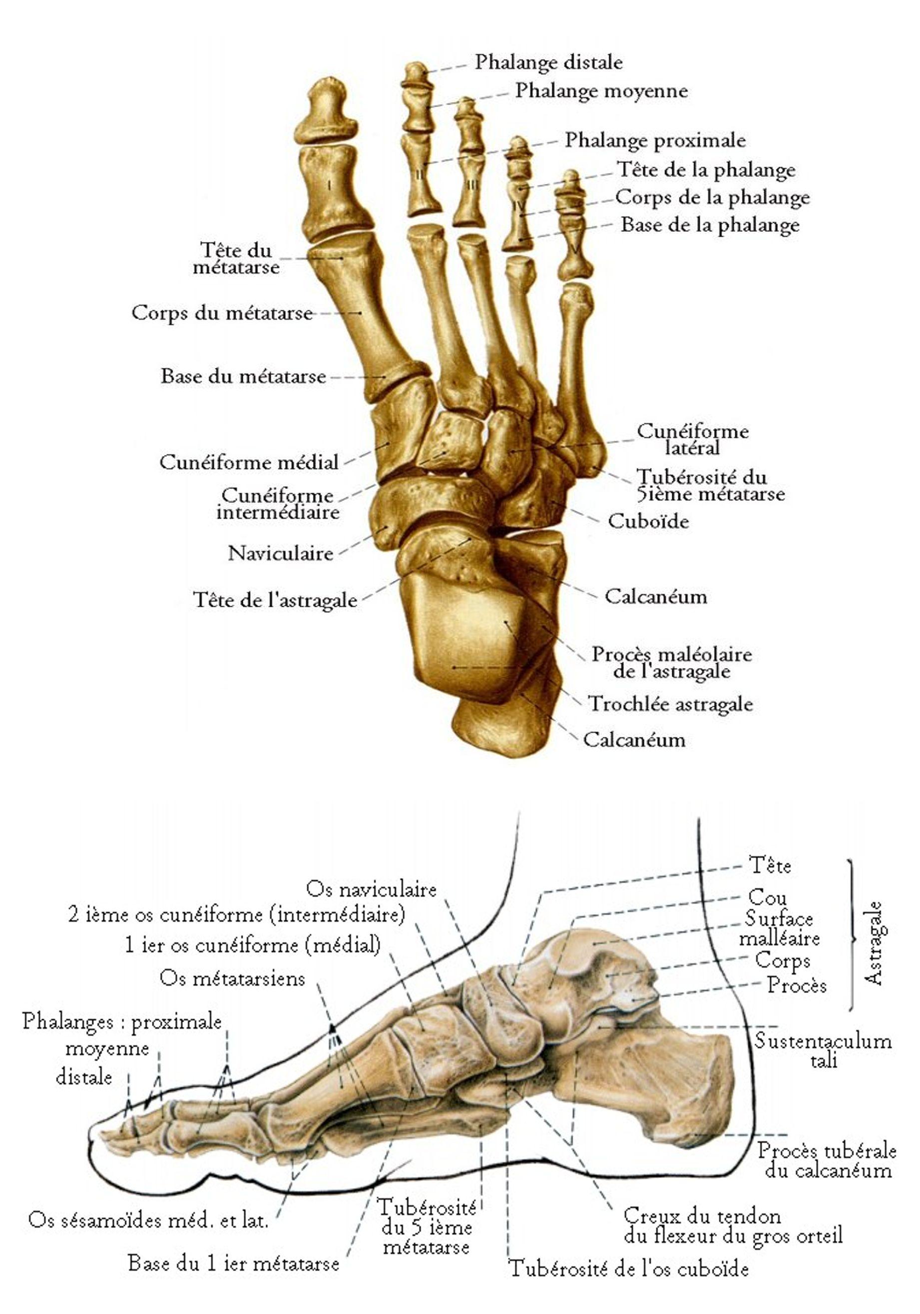 Gemütlich Menschliche Anatomie Und Physiologie Laborhandbuch ...