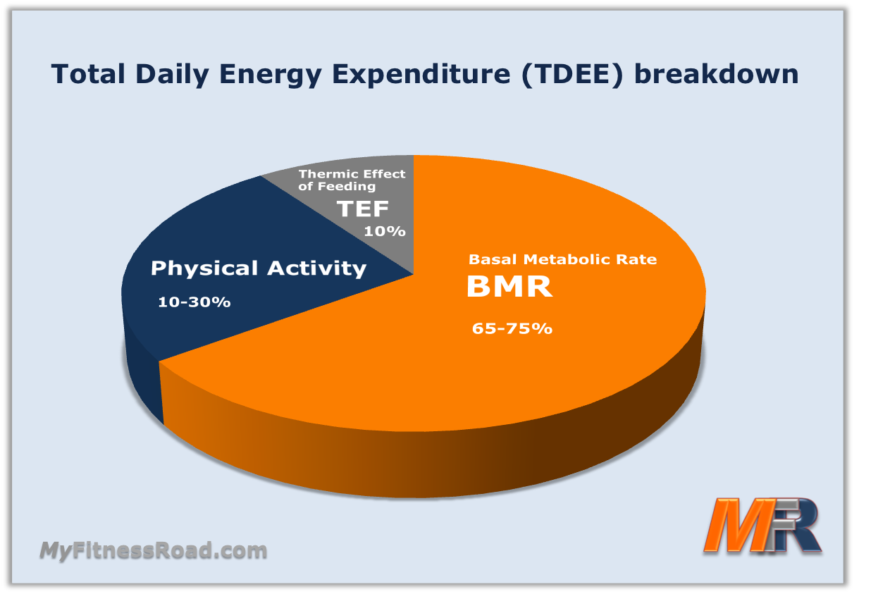 total daily energy expenditure, tdee breakdown or metabolic rate, Muscles