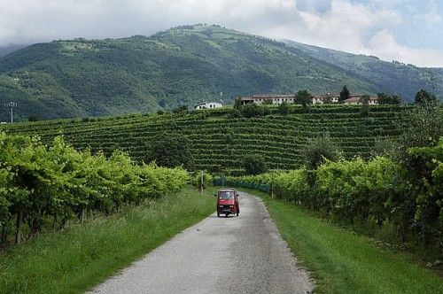 Vineyards of Conegliano & Valdobbiadene, are the homes of the highest quality prosecco, and are a part of the Sister City relationship between Sarasota, Florida and the Province of Treviso in Italy