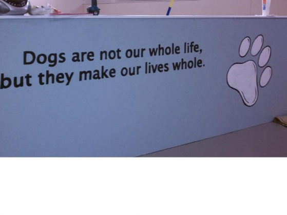 Dog E Woggy Daycare In Rochester Ny Dogkennel Dog Kennel Dog Kennel Desk Dog Boarding Kennels Dog Daycare Dog Grooming Salons