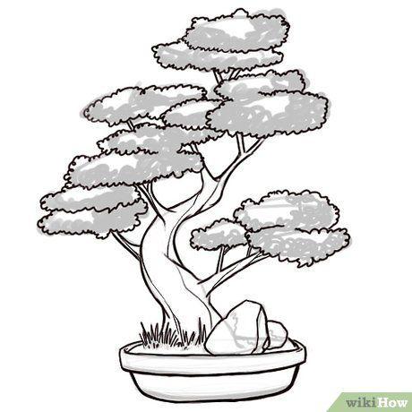 How to Draw a Bonsai Tree