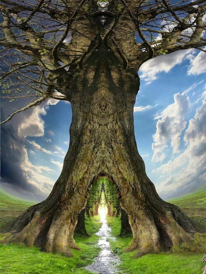 дерево життя фото худшего качества включает