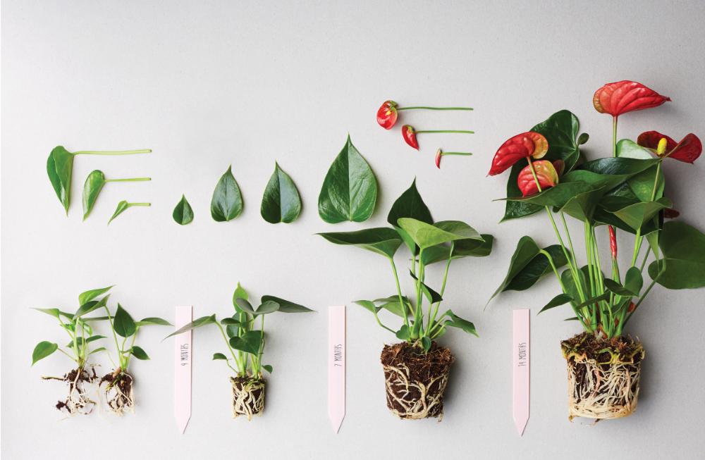 Pin On Plants