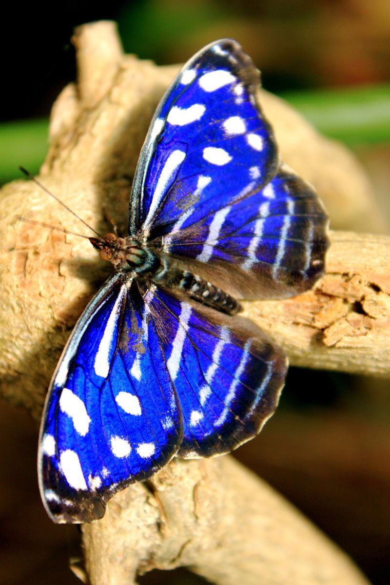 Blue Zebra To some, God may seem complicated in the Bible, but in nature, He is the Master Artist.