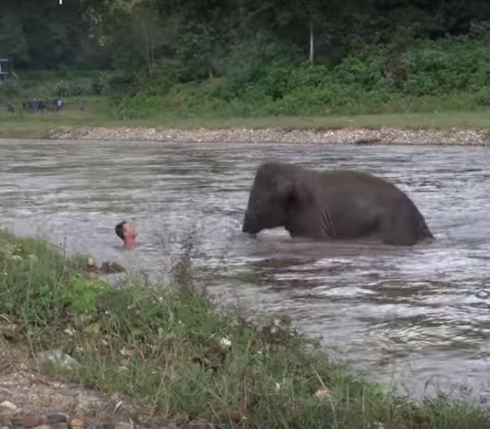 Pequeno elefante vê tratador em apura-os e salva-o