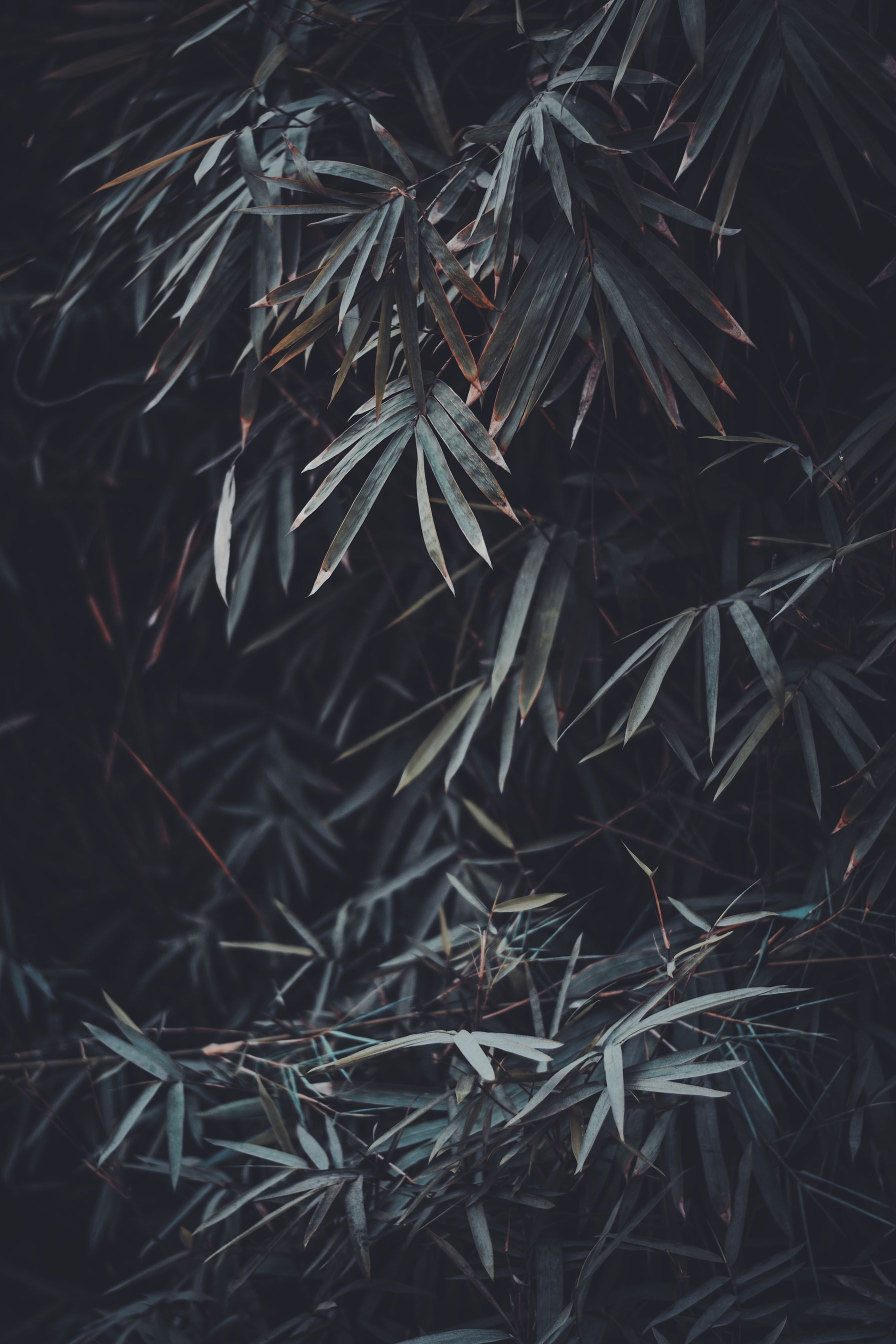 Best Dark Or Black Iphone Wallpapers Night Iphone Backgrounds Free Download Objek Gambar Wallpaper Hitam Lightroom