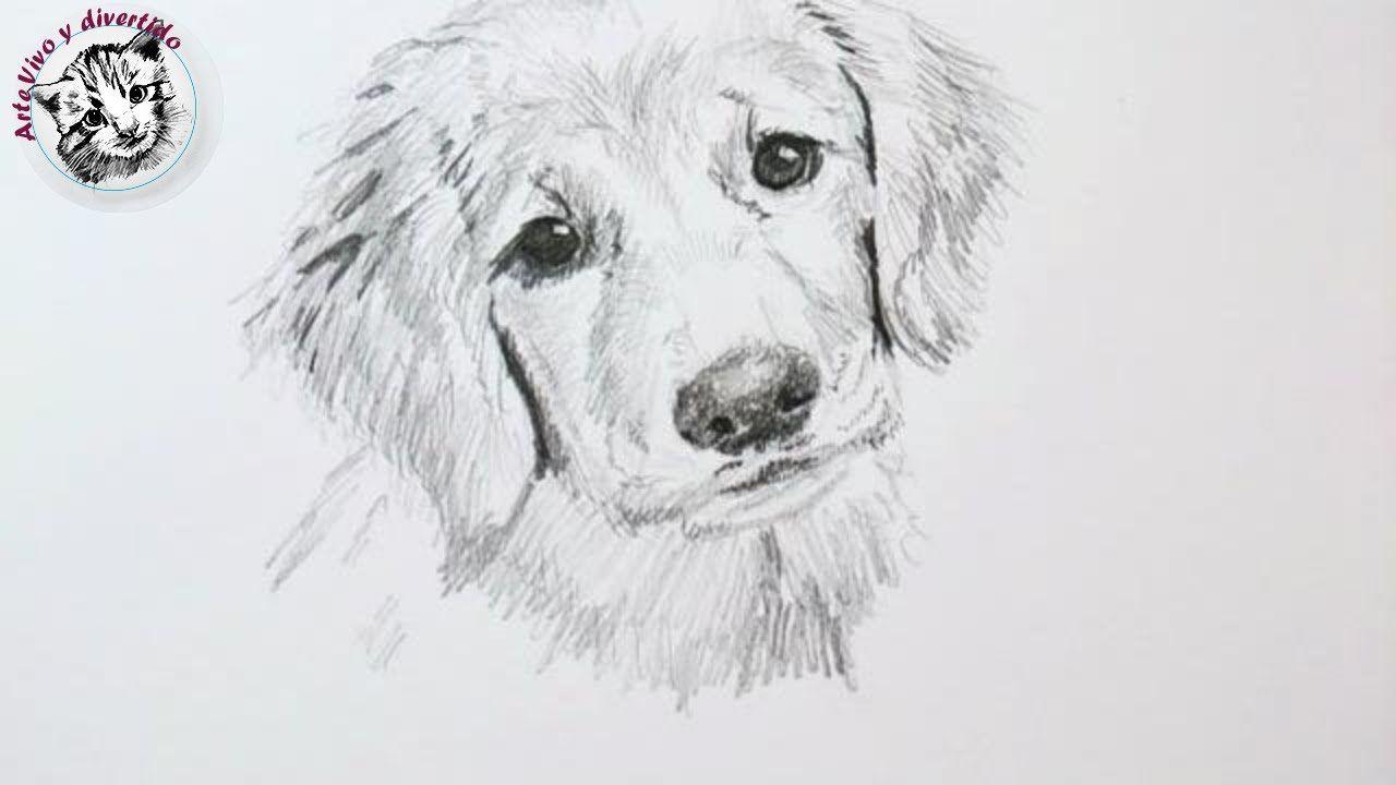 Tips Y Trucos De Dibujo Con Lapiz Como Dibujar Un Perro Audio Complet Como Dibujar Un Perro Pintura Perro Dibujos