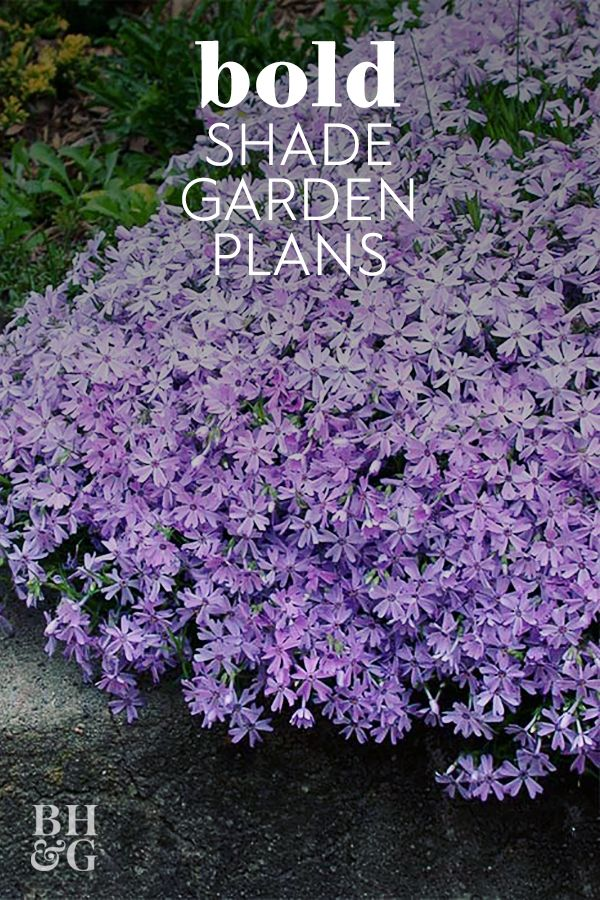 This Lush Shade Garden Is So Easy to Create