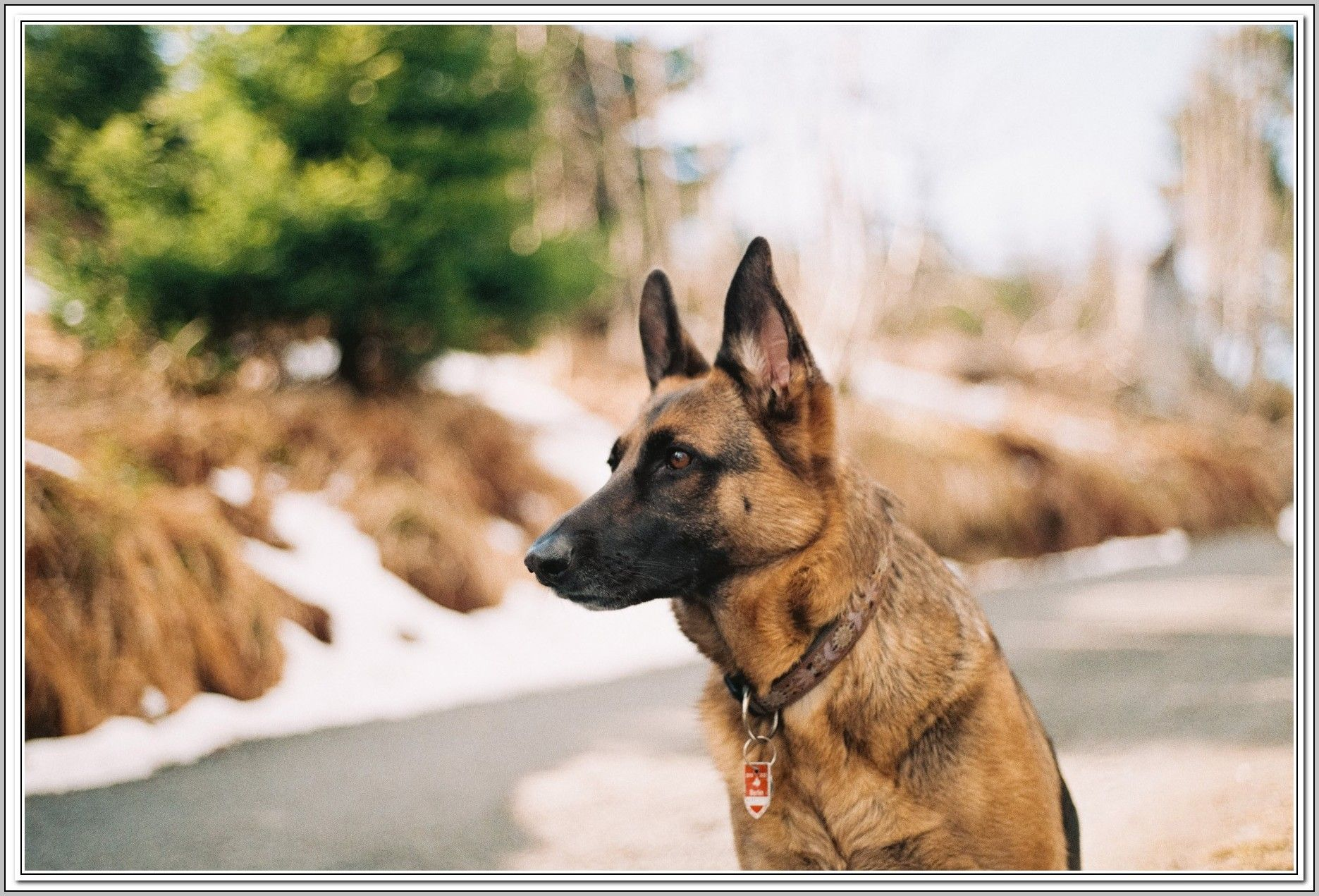 Repairing Problems Related To Dogs My Four Legged Pal German