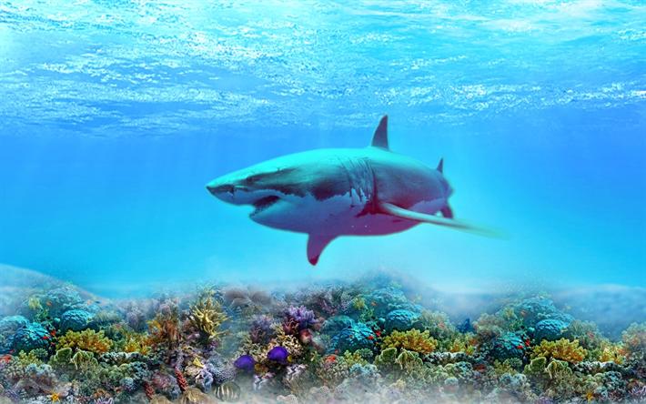 Download Wallpapers Shark Depth Coral Reef Underwater World Predators Besthqwallpapers Com Arrecife De Coral Imágenes De Tiburones Arrecifes De Coral