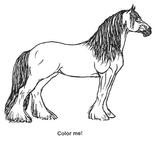 Clydesdale Coloring Page Kids