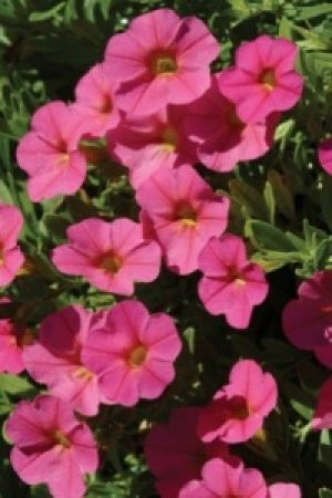Super User Gardening In South Africa Beautiful Flowers Plants Small Plants