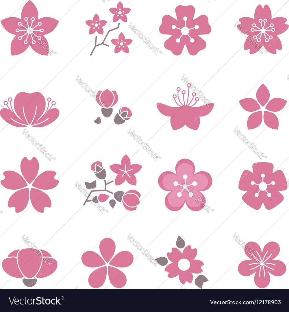 Vector image of cherry pink flower spring sakura blossom vector