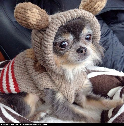 Sweet Chihuahua Susse Tiere Hunde Pullover Tierbabys