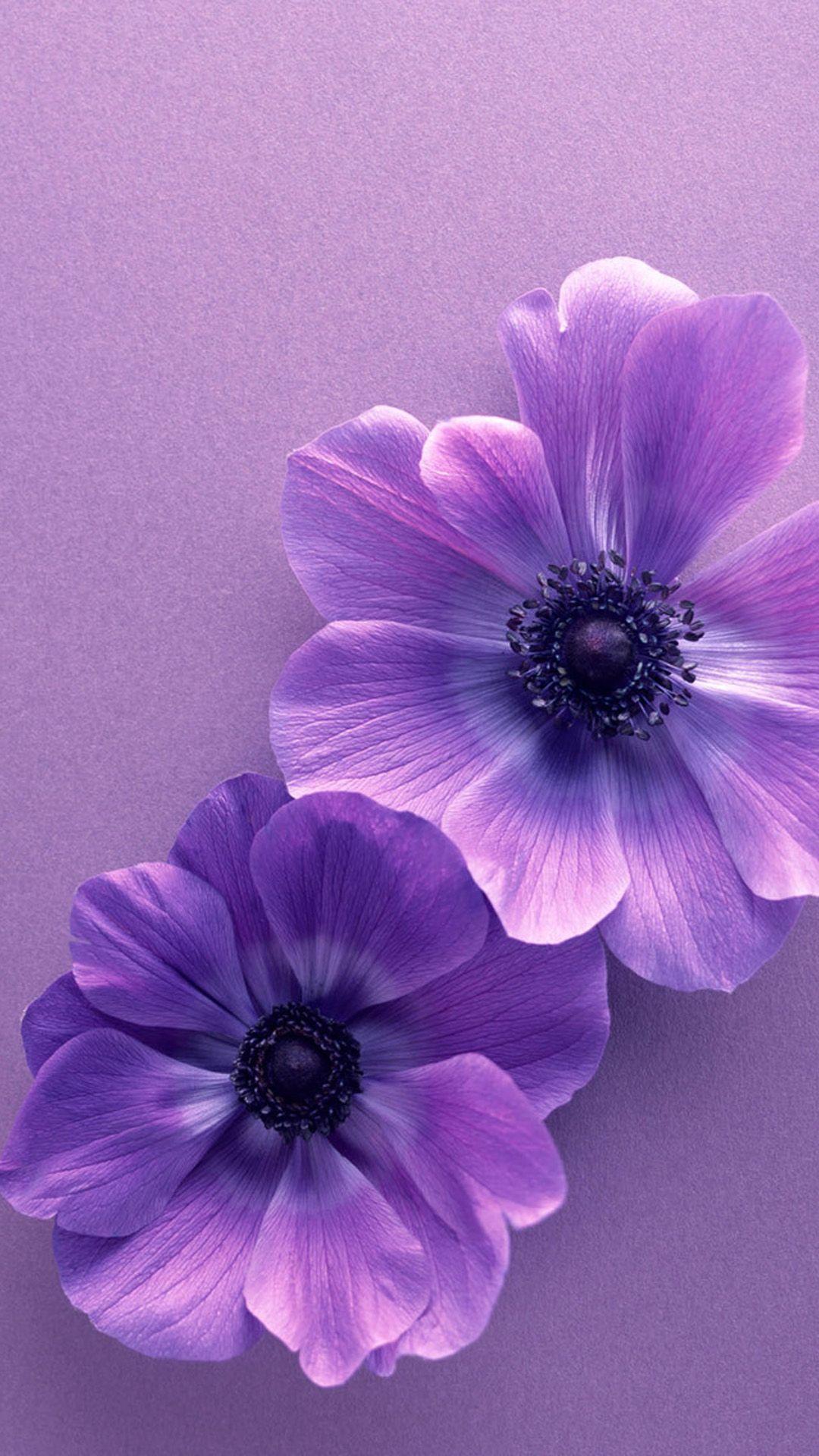 Flower Samsung Galaxy S5 Wallpapers 152 Purple flowers