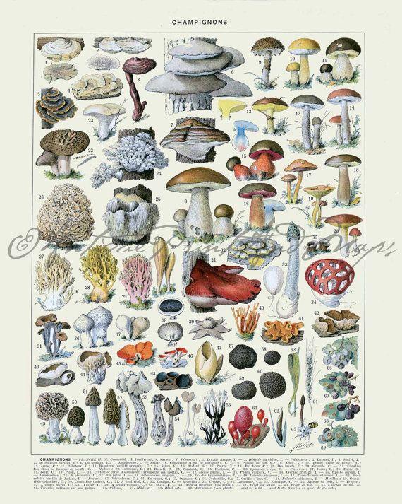 French Mushrooms Super Large Poster Print by BackAlleysBackRoads