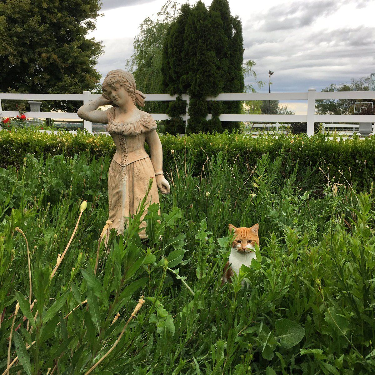 Laura Leboutillier Gardenanswer Twitter Happy Cat Cat