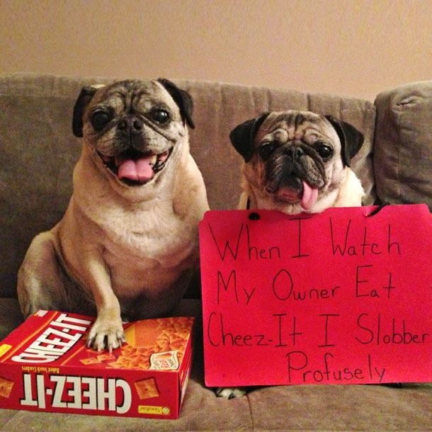 Cheez It S Funny Images Cheez It Funny