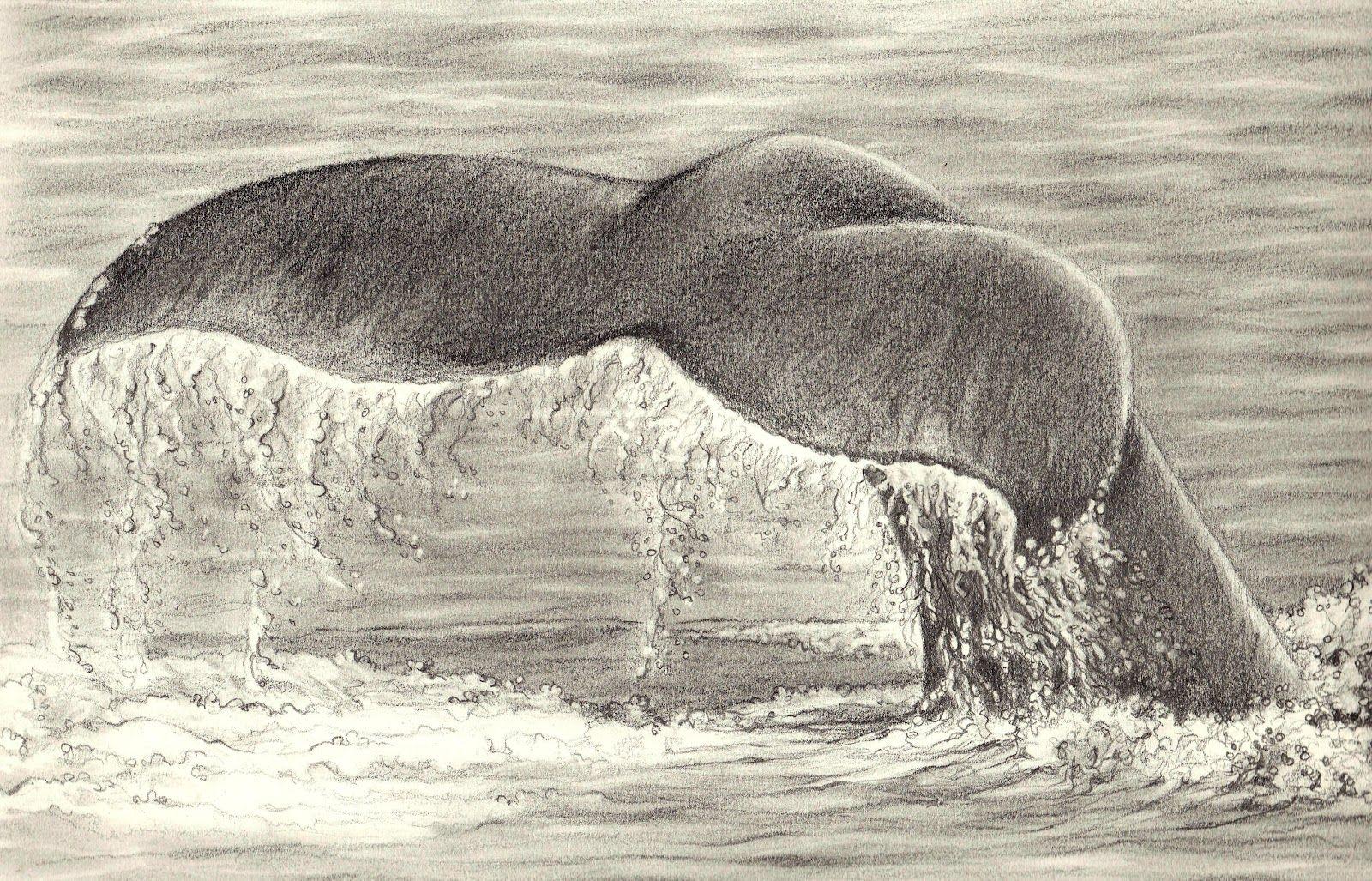 drawings of oceans Google Search Ocean drawing, Whale