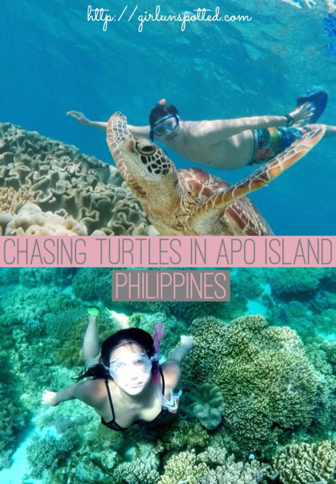 How To Successfully Chase Turtles (In Apo Island