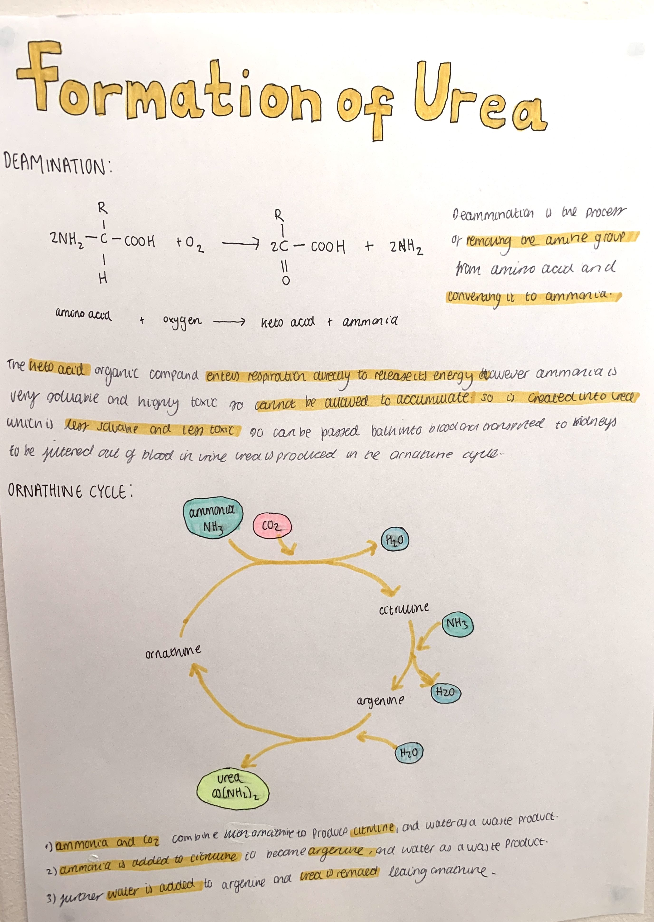 A Level Biology Revision In
