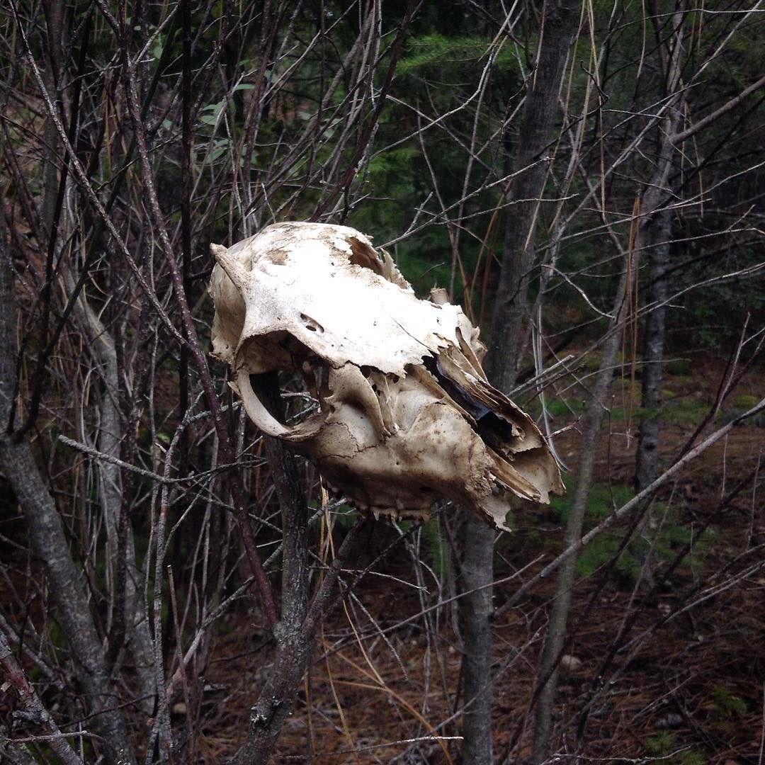 Fox Skull Greeting The Entrance To The Path What Does It Mean