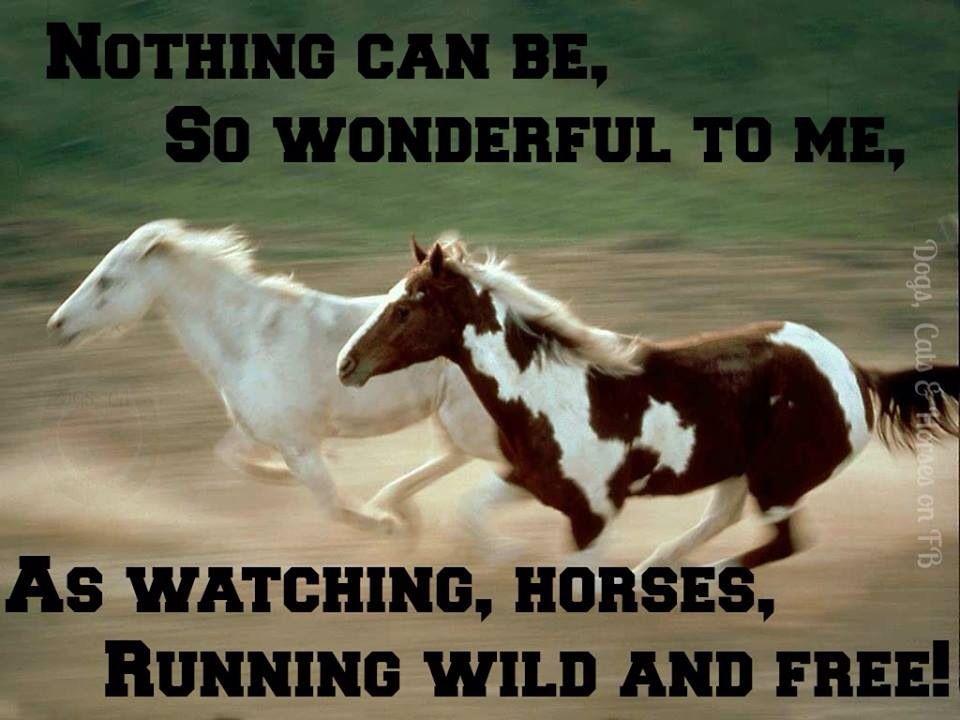 Breaking A Wild Horse Quotes. QuotesGram | Horses, Wild ...