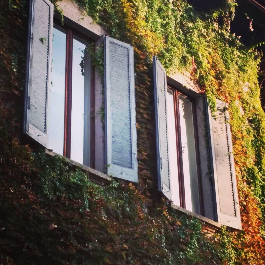 Le vigne di Leonardo  #milanodavedere #foto_italiane #windows#spettacolo #autumn #autunno #colorful #colors #red#green #milan#milano#italy#italia#leonardodavinci #levignedileonardo #foto#photo#pictures #fotodelgiorno #picoftheday #photooftheday #love#giardino #garden#gardenia#igersoftheday #volgoitalia #volgolombardia by filodepa74