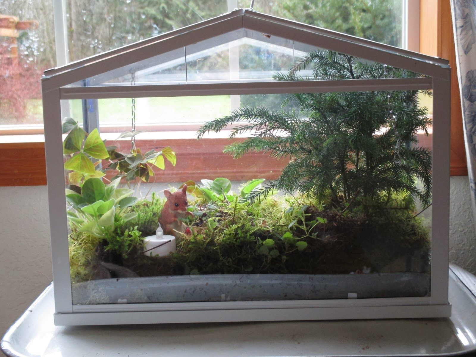 from cedar pond to laughing dove farm terrariums. Black Bedroom Furniture Sets. Home Design Ideas