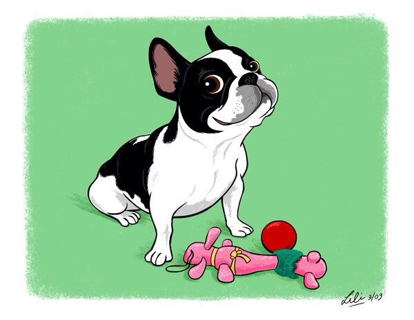 French Bulldog Or Boston Terrier Illustration By Lili Chin Boston Terrier Illustration Boston Terrier Lover Boston Bull Terrier