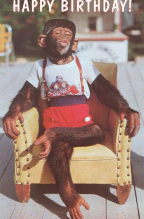 Happy Birthday Monkey Birthday Humor Birthday Meme Happy Birthday Funny