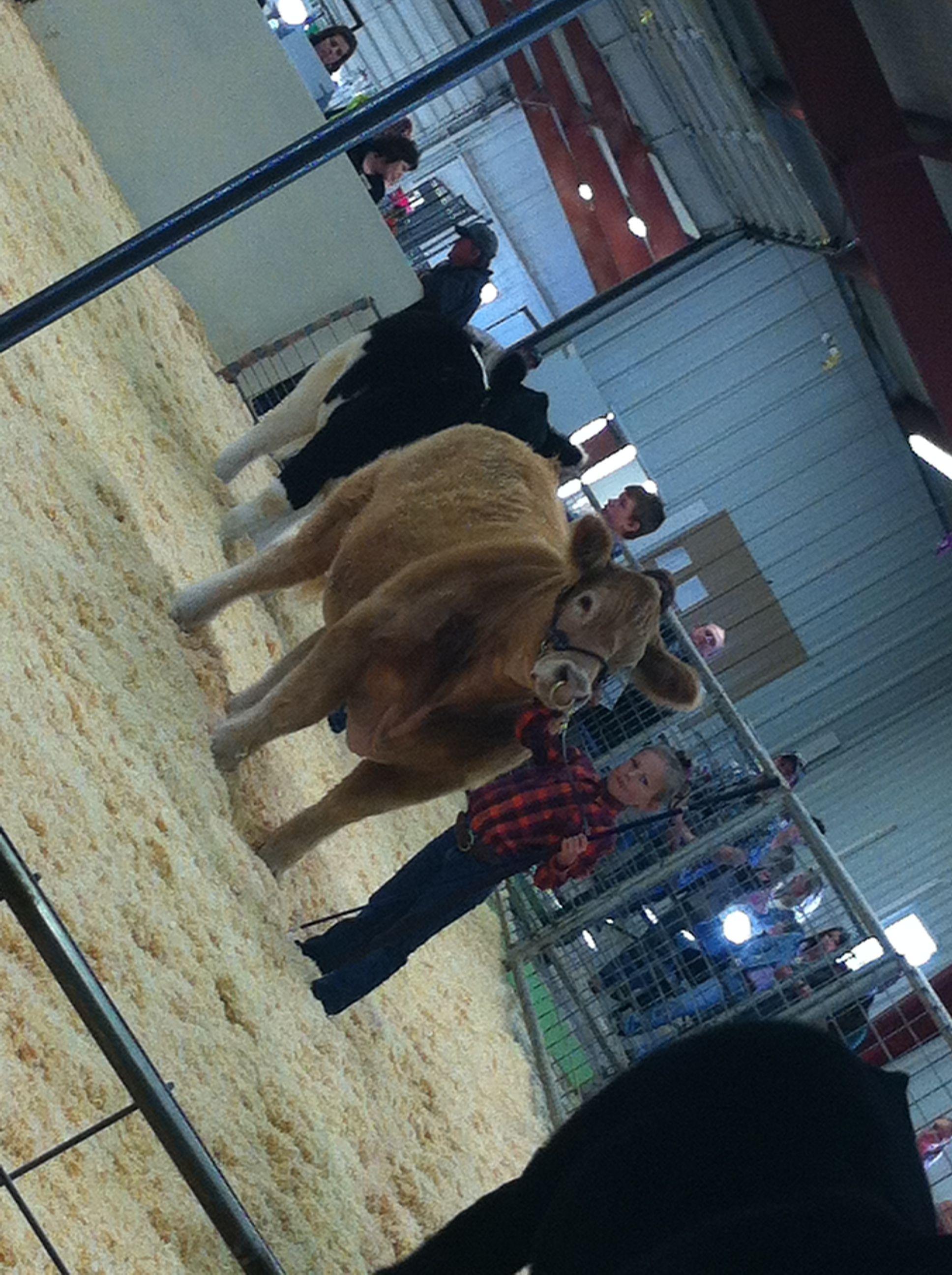 Kloee's first year steer!