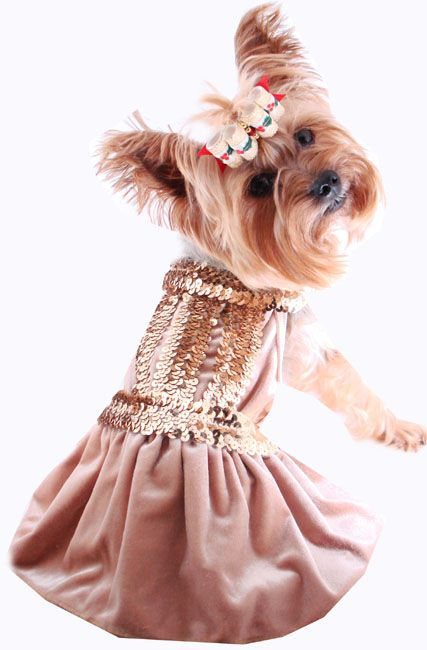 51223cf1d324a Pet Dresses - Fancy Dog Dress, Puppy Dresses, Doggie Clothes, Formal,  Wedding, Christmas Dog Dress, Birthday Dress, Wedding Dress For Dogs, Pet  Boutique