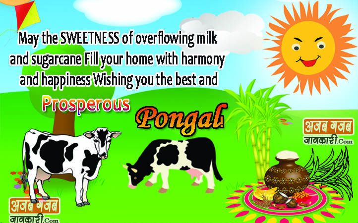 Happy pongal greetings quotesinspirationmotivational pinterest happy pongal greetings quotesinspirationmotivational pinterest happy pongal quotes images and motivational m4hsunfo