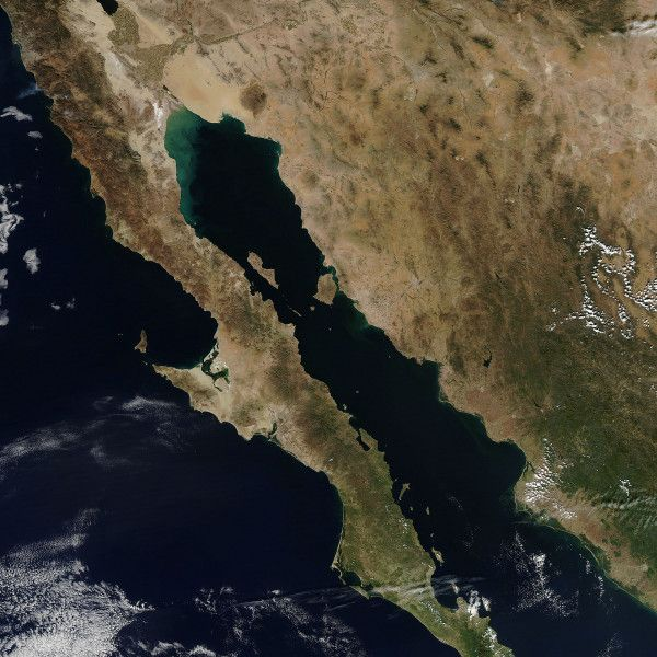 México. Partes de Baja California, Sonora y Sinaloa.