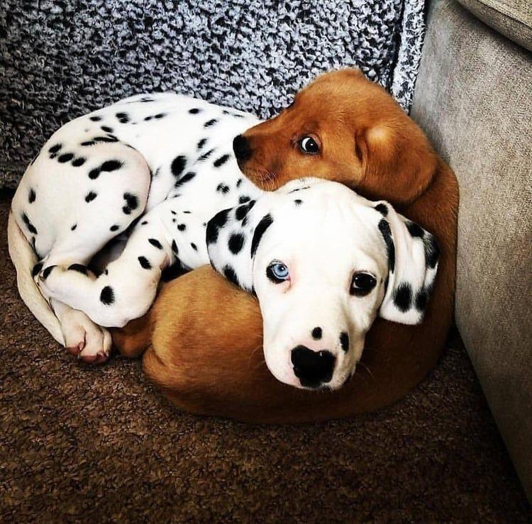 Snuggle Time Boris And Doug Shared By Blue9saphire Cute
