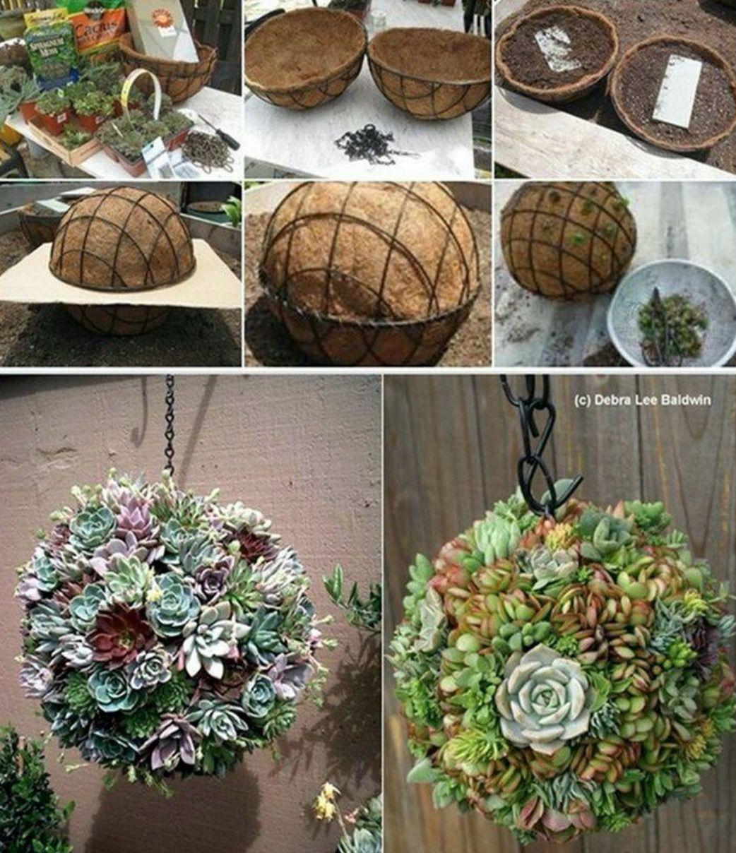 Succulent Sphere DIY Is Your Next Project