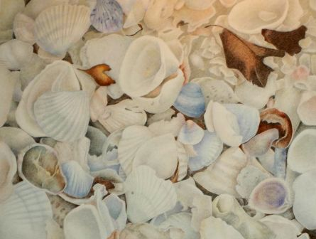 """Beach Shells"" Colored Pencil drawing based on a Florida beach. www.marykhyatt.com"