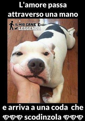 Frasi Sui Cani Pitbull.Immagini Con Frasi Aforismi E Citazioni Sui Cani Citazioni Sui Cani Cani Citazioni Sugli Animali