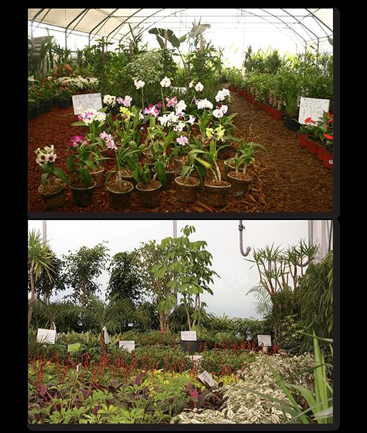 viveros hijuelas s a mercado de flores y plantas