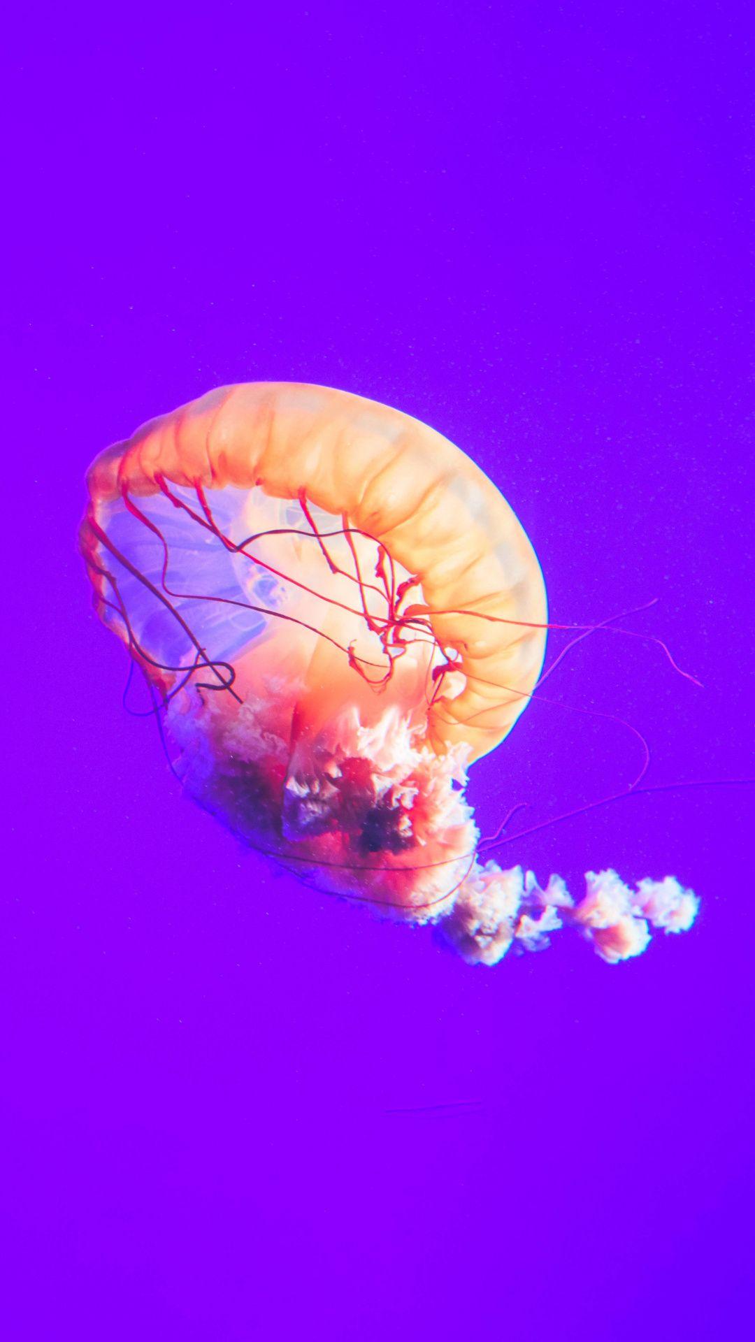 Jellyfish Underwater Aquarium 1080x1920 Wallpaper Dengan Gambar