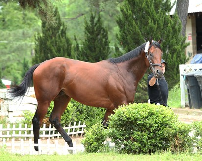 Nadal Horse Profile Bloodhorse In 2020 Horse Profile Horses Horse Racing