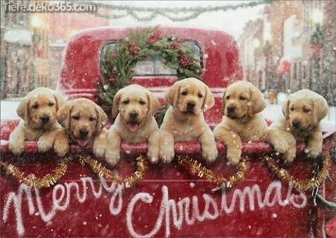 Photo of Breathtaking Christmas animals from all over the world